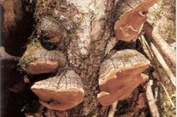 National park in fungus plea to walkers