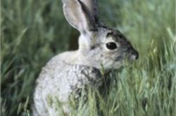 Fight launched to save rabbit story common