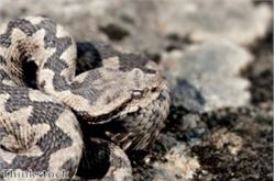 Walkers reminded of adder danger
