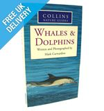 Nature Guide: Whales &amp; Dolphins
