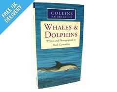Nature Guide: Whales & Dolphins