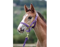 Wessex Headcollar and Lead Rope Set